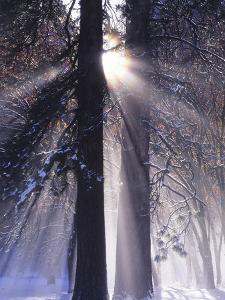 Rising Sun, Yosemite Valley, Yosemite National Park, Sierra Nevada, California by Christopher Bettencourt
