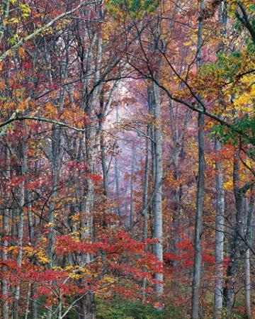 Glowing Autumn Forest, Virginia by Christopher Burkett