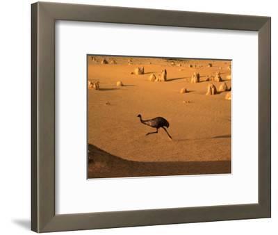 Emu Running Through the Pinnacles, Pinnacles Desert, Australia