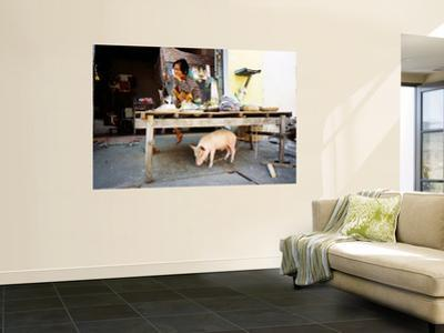 Woman and Pet Pig