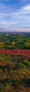 Fields and Wildflowers, Palouse Country, Eastern by Christopher Jacobson