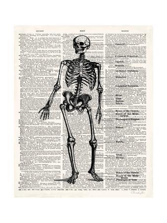 Vintage Anatomy Skeleton