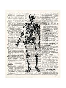 Vintage Anatomy Skeleton by Christopher James