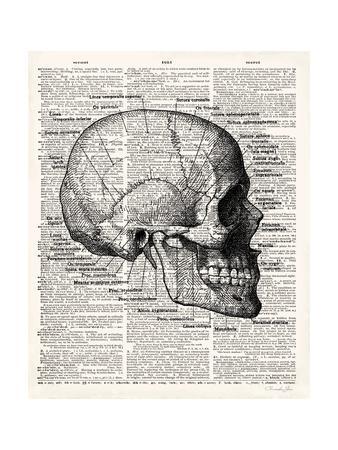 Vintage Anatomy Skull