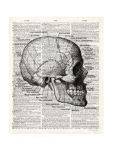 Vintage Anatomy Skull by Christopher James