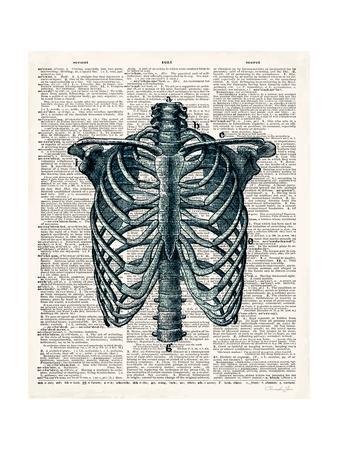 Vintage Anatomy Study