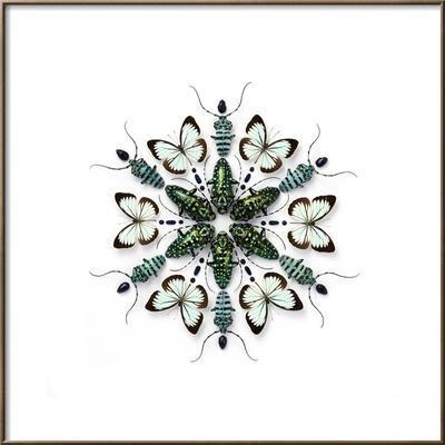 Elegans Prism by Christopher Marley