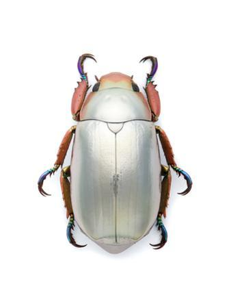 Jeweled Scarab by Christopher Marley