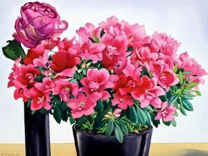 Azalea Rose by Christopher Ryland