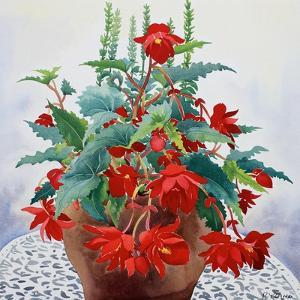 Begonia by Christopher Ryland