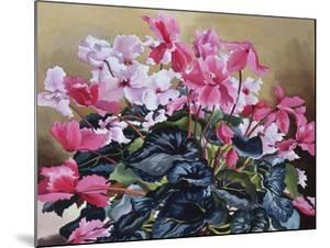Cyclamen, 2004 by Christopher Ryland