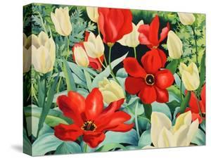 Early Tulips by Christopher Ryland