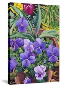 Flowerpots with Pansies, 2007 by Christopher Ryland