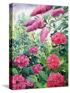 Garden Hydrangeas and Buddleia by Christopher Ryland