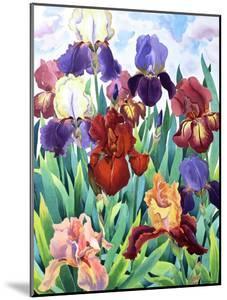Glemsford Irises by Christopher Ryland
