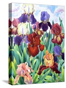 Glemsford Irises by Christopher Ryland