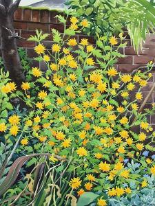 Kerria Japonica by Christopher Ryland