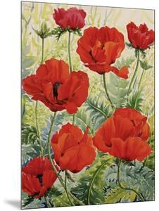 Large Red Poppies by Christopher Ryland