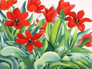 Madame Lefeber Tulips by Christopher Ryland