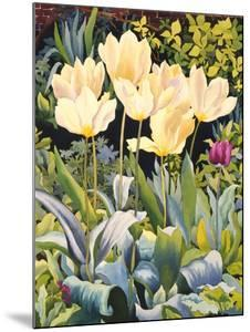 Pale Tulips by Christopher Ryland
