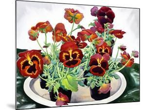 Pansies by Christopher Ryland