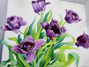 Purple Fringe Tulips by Christopher Ryland