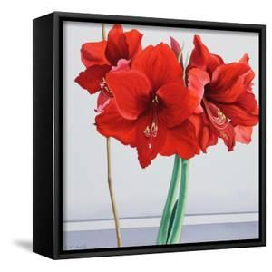 Red Amaryllis by Christopher Ryland