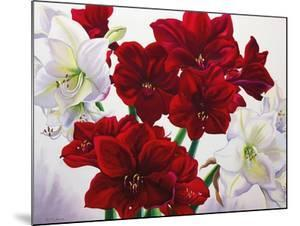 Red and White Amaryllis, 2008 by Christopher Ryland