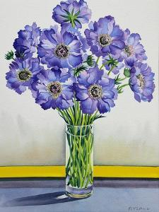 Scabious with Yellow Band by Christopher Ryland