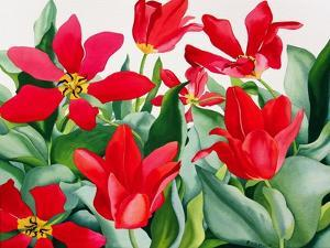 Shakespeare Tulips by Christopher Ryland