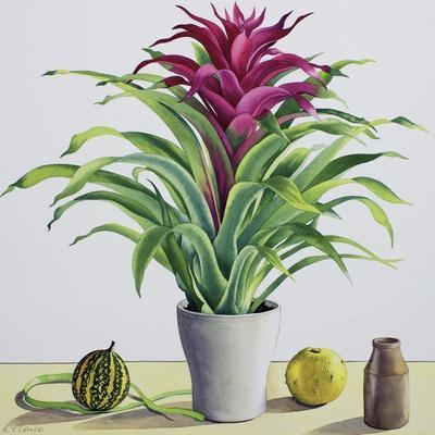 Still Life with Bromeliad