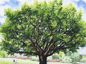 Summer Oak Tree by Christopher Ryland