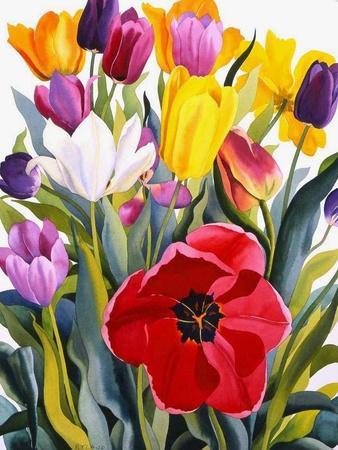 Tulips, 2007