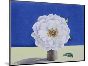 White Rose by Christopher Ryland