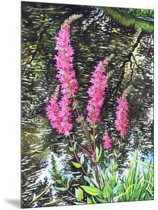 Wild Loosestrife by Christopher Ryland