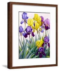 Yellow and Purple Irises by Christopher Ryland