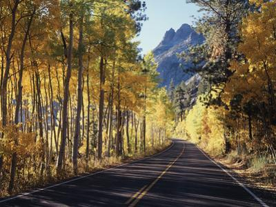 A Road Through the Autumn Colors of Aspen Trees in the June Lake Loop by Christopher Talbot Frank