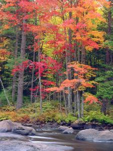 Autumn in the Adirondack Mountains, New York, Usa by Christopher Talbot Frank