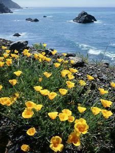 California, Big Sur Coast, Central Coast, California Poppy by Christopher Talbot Frank
