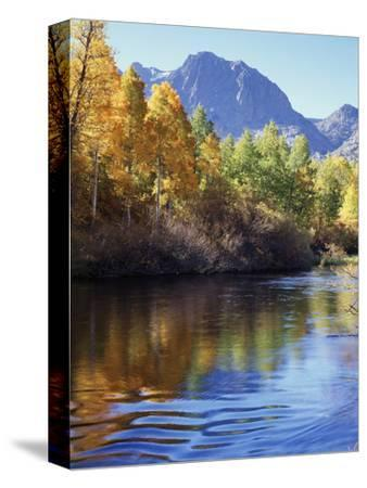 California, Sierra Nevada, Inyo Nf, Autumn Aspen Reflect in Rush Creek