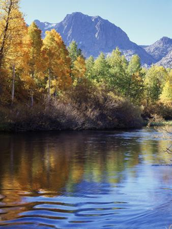 California, Sierra Nevada, Inyo Nf, Autumn Aspen Reflect in Rush Creek by Christopher Talbot Frank