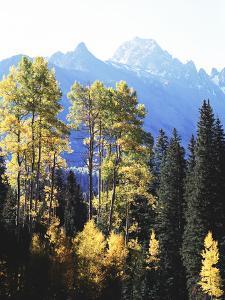 California, Sierra Nevada, Inyo Nf, Autumn Aspens Below Mountain Peak by Christopher Talbot Frank