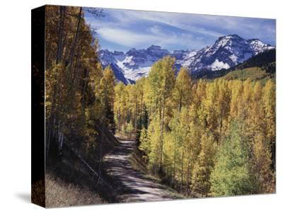 Colorado, Rocky Mountains, Dirt Road, Autumn Aspens in the Backcountry