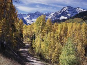 Colorado, Rocky Mountains, Dirt Road, Autumn Aspens in the Backcountry by Christopher Talbot Frank