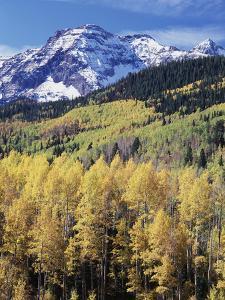 Colorado, Rocky Mts, Aspen Trees Below a Mountain Peak in Fall by Christopher Talbot Frank
