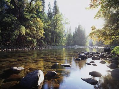 New York, Adirondack Mts, Fall Trees Alond a Stream