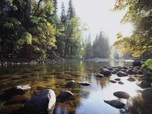 New York, Adirondack Mts, Fall Trees Alond a Stream by Christopher Talbot Frank