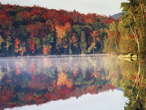 New York, Adirondack Mts, Sugar Maples and Fog at Heart Lake in Autumn by Christopher Talbot Frank