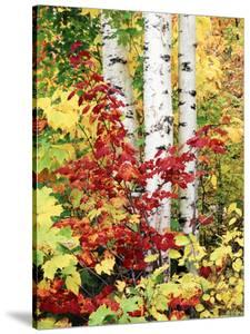 New York, Adirondack Mts, the Fall Colors of Trees by Christopher Talbot Frank