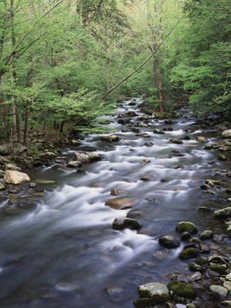 Tennessee, Great Smoky Mountains National Park, a Mountain Stream by Christopher Talbot Frank